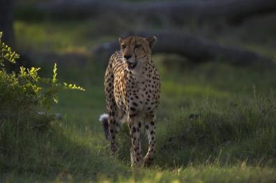 Africa_032