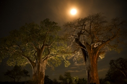 Africa_102